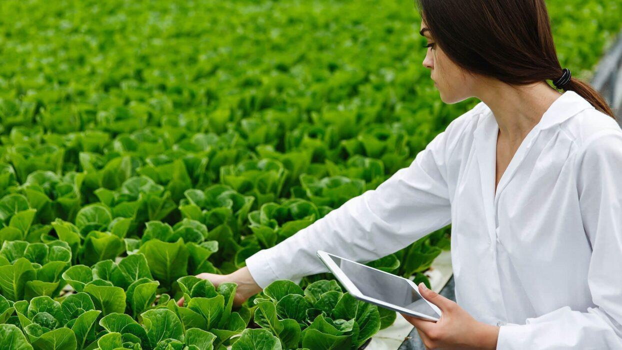 Farm Business Innovation | Birmingham